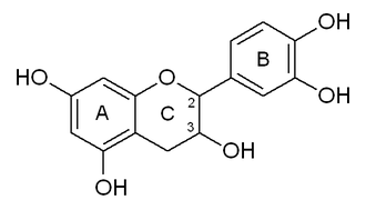 Catechin - Catechin numbered