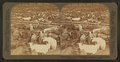Cattle in the Great Union Stock Yards, the greatest of the live stock markets, Chicago, Ill, from Robert N. Dennis collection of stereoscopic views.png