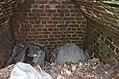 Caveau funéraire envahi de végétaux - contenant deux cercueils.jpg