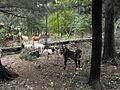 Central Asian pups on duty.jpg