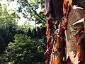 Chadwick Arboretum (28786418563).jpg