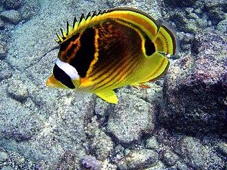 Khao Phing Kan - Butterflyfish