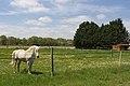 Chailly-en-Bière - 2013-05-04 - Chevaux - IMG 9749.jpg