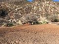 Champ dans la Vallée du Paradis, Maroc.jpg