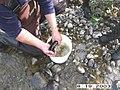 Charley River Water Quality Testing, Yukon-Charley Rivers, 2003 2 (106f4667-e41c-4b10-9df7-793ef3a24ad1).jpg