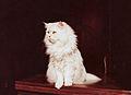 Chat persan chinchilla.jpg