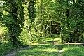 Chemin de Champfailly à Chevreuse le 21 mai 2015 - 12.jpg