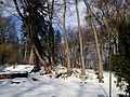 Chernivtsi Arboretum 04.jpg