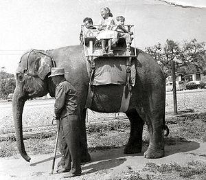 Jungleland USA - Children on an elephant at Jungleland, 1962