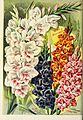 Childs' rare flowers, vegetables, and fruits (1908) (20419575158).jpg