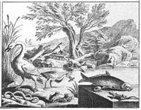 Chodowiecki Basedow Tafel 8 c.jpg