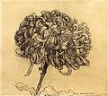 Chrysanthemum by Piet Mondrian (Guggenheim).jpg
