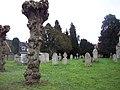 Churchyard, St Peter and St Paul, King's Somborne - geograph.org.uk - 350302.jpg