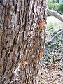 Cicada Exuvia 2.jpg
