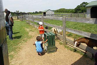 Clark's Elioak Farm - Children feeding goats at petting zoo.