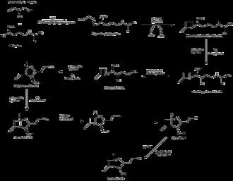 Clavulanic acid - Image: Clavualnic Acid Biosynthesis