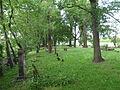 Cmentarz ewangelicki na Kępie Zawadowskiej 07.JPG