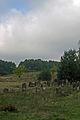 Cmentarz zydowski 8 - 640733.jpg