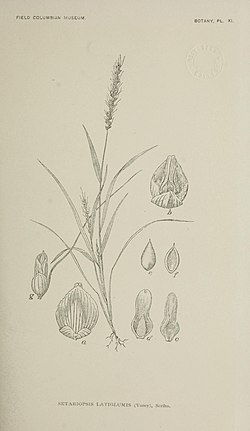 Contribution (I)-III to the coastal and plain flora of Yucatan (1895) (20496856278).jpg