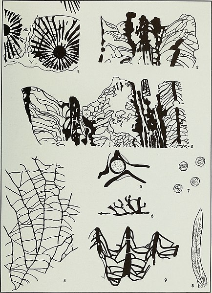 File:Corals from the Chouteau and related formations of the Mississippi Valley Region (1944) (20689973182).jpg