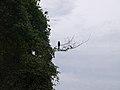 CostaRica (6108405135).jpg