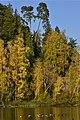 Couleurs dorées à l'étang de la Ferme (22729557406).jpg