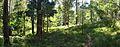 Couranga Track - panoramio (24).jpg