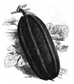 Courge des Patagons Vilmorin-Andrieux 1883.png