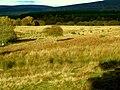 Cunnach Moss - geograph.org.uk - 475295.jpg