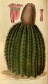 Curtis's Botanical Magazine, Plate 3090 (Volume 58, 1831).png