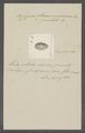 Cypraea punctata - - Print - Iconographia Zoologica - Special Collections University of Amsterdam - UBAINV0274 088 02 0064.tif