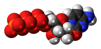 Cytidine triphosphate - Image: Cytidine triphosphate anion 3D spacefill