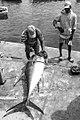 Découpe du thon, Pêche traditionnelle à Palmeira, île de Sal, Cap-Vert.jpg