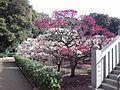 Dômyô-ji-tenman-gû Shrine - Plum Garden2.jpg