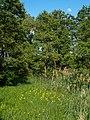 Dörfleins Mainaltarm 5211643.jpg
