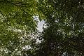 Dülmen, Naturschutzgebiet -Franzosenbach- -- 2014 -- 0036.jpg