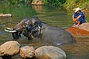 DGJ 4157 - One Happy Elephant, smiling (3727234003).jpg