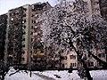 DOBRZEC ZIMOWY 01 - panoramio.jpg