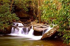 Davidson River 2.jpg