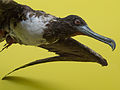 Denis Bourez - Natural History Museum, London (8900352879).jpg