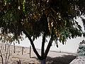 Desert plants 43.JPG