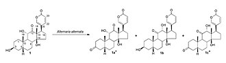 Arenobufagin - The different metabolites obtained from the biotransformation of arenobufagin by Alternaria alternata