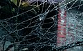 Dew on spider webs.jpg
