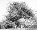 Die Gartenlaube (1895) b 873 1.jpg