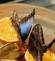 Discussion Among Butterflies (73173621).jpeg