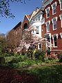 Dogwood on East Capitol Street, Capitol Hill, Washington DC - May 2014.jpg