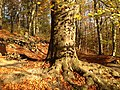 Doline in Steilstufe des Muschelkalks zwischen Bad Berka und Saalborn 04.jpg