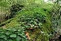 Draved-Skov-nedbrydning4.jpg