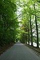 Dreef in het park van Tervuren - 375666 - onroerenderfgoed.jpg