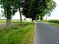 Droga do Piaseczna - panoramio.jpg